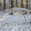 Winter Woodland Wonderland — Stock Photo