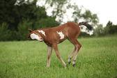 ładnie malować klaczy konia na pastwiska — Zdjęcie stockowe
