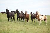 Partia koni na pastwiska — Zdjęcie stockowe