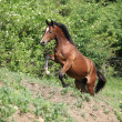 Foto Stock: Nice brown horse running uphill