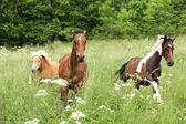 Batch of horses running on pasturage — Stock Photo