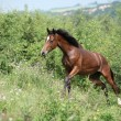 Nice young horse running uphill — Stock Photo