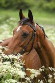 Vackert brunt sto med betsel — Stockfoto
