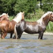 Batch of chestnut horses in the wather — Stock Photo
