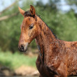 Stock Photo: Portrait of nice wet foal