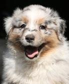 Precioso cachorro sonriéndote — Foto de Stock