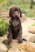 Gorgeous puppy in the garden — Stock Photo