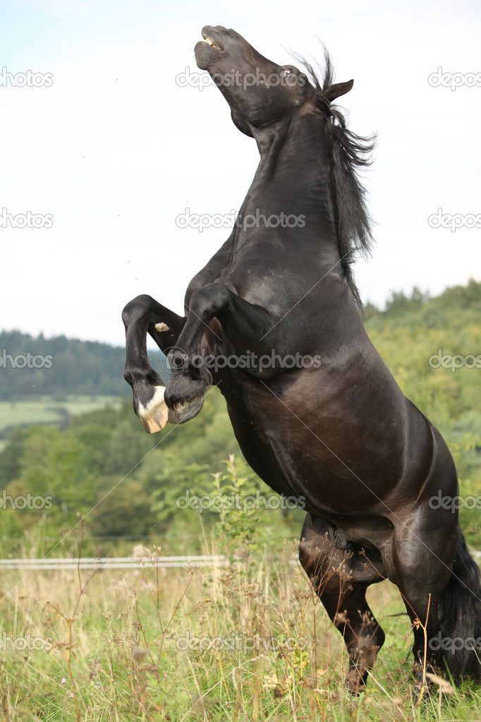 Angry horse - photo#14