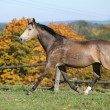 Nice mare on autumn pasturage — Stock Photo #34711847