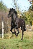 Gorgeous black stallion running in autumn — Stock Photo
