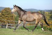 Nice mare on autumn pasturage — Stock Photo
