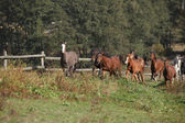Group of horses running on autumn pasturage — Stock Photo
