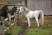Nice white stallion meeting other horses — Stock Photo