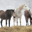 Batch of horses in winter — Stock Photo