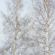 Two birch trees in winter — Stock Photo