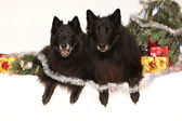 Two gorgeous black dogs with christmas decorations — Stock Photo