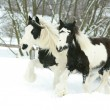 Mare with foal together in winter — Stock Photo