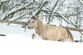 çok güzel ve şirin defne midilli kışın çalıştırma — Stok fotoğraf