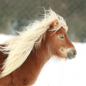 Beautiful chestnut pony with long mane in winter — Stock Photo