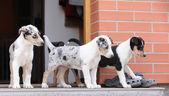 Primo viaggio di cuccioli al mondo esterno — Foto Stock