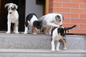 Puppies first trip to the outer world — Stock Photo