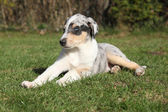 Adorable Puppy der Collie glatt im Garten — Stockfoto
