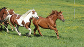 Batch of beautiful horses running on pasturage — Stock Photo