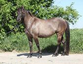 Amazing pony standing on the road — Stock Photo