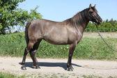 Amazing pony standing on the road — Photo