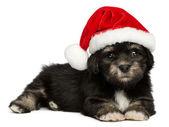 Cute Christmas Havanese puppy dog with a Santa hat — Φωτογραφία Αρχείου