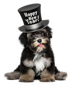 Cute havanese puppy dog is wearing a Happy New Year top hat — Stock Photo