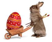Lustige osterhasen rabbit mit einer schubkarre und eine rote ostern zb — Stockfoto