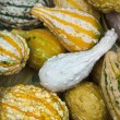 Decorative pumpkins — Stock fotografie