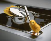 Chicken little — Stock Photo