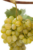 White grapes isolated on white background — Stock Photo