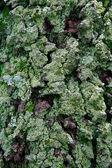 Texture of moss on tree — Stock Photo