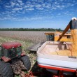 Corn harvest — Stock Photo #49241211