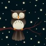 Sleepy Owl — Stock Vector #23808719