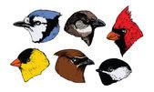 Bird Heads — Stock Vector