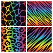 Rainbow Animal Print Collection — Stock Vector