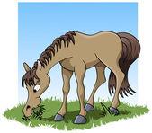 Jedzenie konia — Zdjęcie stockowe