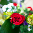 Red rose flower — Stockfoto #24121961