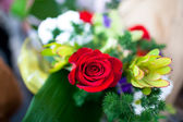 Red rose flower — Stock Photo
