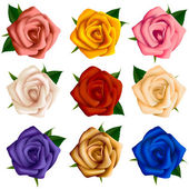 Set of roses of various colors — Stock Vector