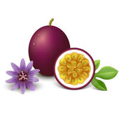 Passion fruit vector illustration — Stock Vector