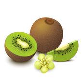 Kiwi fruit vector illustration — Stock Vector