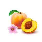 Peach with slice on white background — Stock Vector