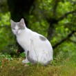 Stock Photo: Small Cat looking