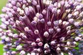 λουλούδι φόντο — Φωτογραφία Αρχείου