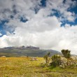 Cotopaxi volcano from Ecuador - 